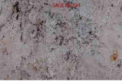 Granite Stone Sage Brush